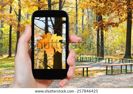 travel concept - tourist taking photo of maple leaf in autumn urban park on mobile gadget
