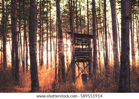 Travel forests in Europe. It was taken in a Hungarian forest. Stock fotó ©
