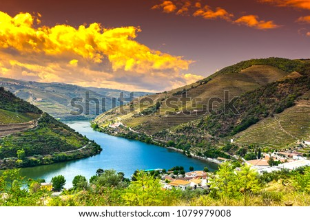 Travel in River Douro region in Portugal among vineyards and olive groves. Viticulture in the Portuguese villages at sunrise