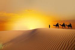 travel Saharan dunes