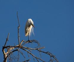Travel to Botswana, from the Kalahari desert to Victoria falls. Animals encountered along the kalahari desert and the okavango delta