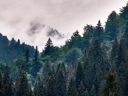 Traveler through the mountains of Romania