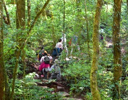 Travelers traveling on trail in evergreen forest, ecotourism in jungle, trekking in green nature, trees in rainforest environment