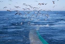 Trawl Fish Net Seagull Sea