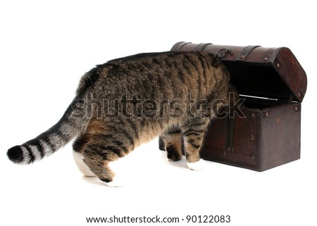 treasure chest with inquisitively cat