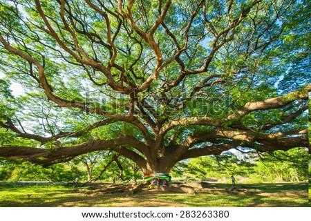stock photo tree 283263380 - Каталог — Фотообои «Природа, пейзаж»