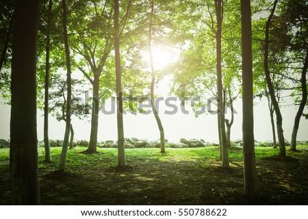 tree #550788622