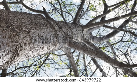 tree  #643979722