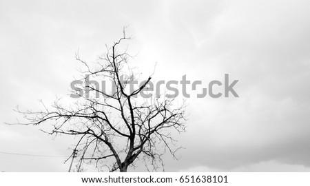 tree #651638101