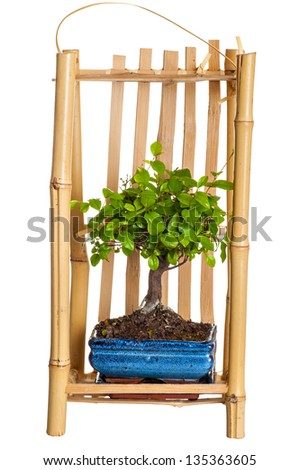 tree a bonsai in packing for carrying