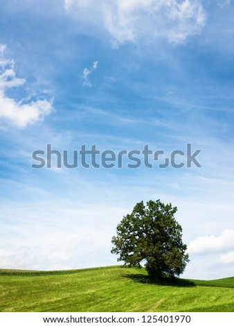 tree a meadow - nice background