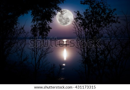 Tree against sky over tranquil lake. Silhouettes of woods and beautiful moonrise, bright full moon would make a nice picture. Beauty of nature use as background. Outdoors.