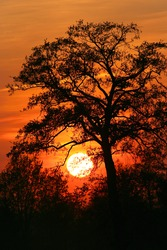 Tree against the sunset