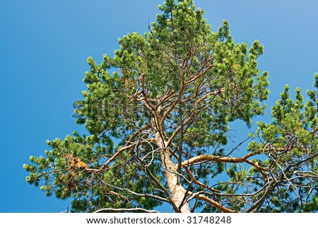 Tree and blue sky.