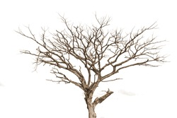 tree and branches of the tree.