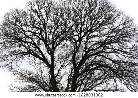 Tree and branches silhouette at winter like lungs and veins Stok fotoğraf ©