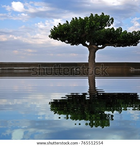 Tree and cloudy sky reflective water reflection square abstract image #765512554