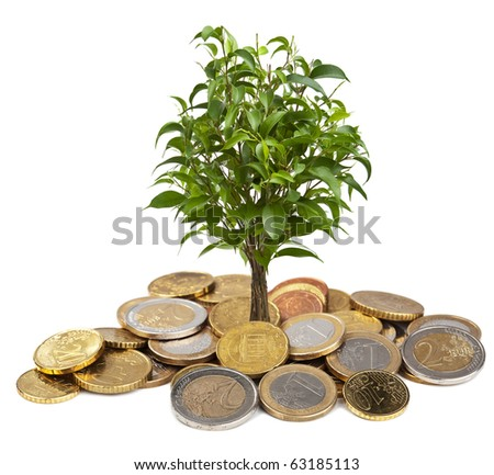tree and coins isolated - stock photo