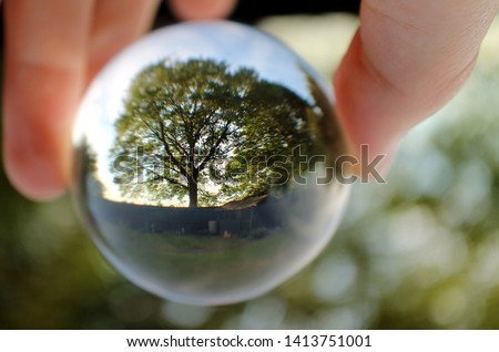 Tree and garden shed backlit by sunset, pictured in a crystal ball / glass sphere held in a hand.