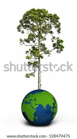 tree and globe over white