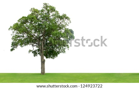 Tree and grass field isolated on white background