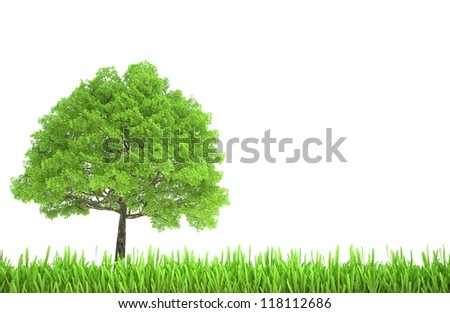 Tree and grass isolated on white background