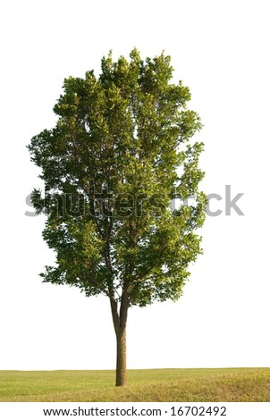 Tree and grass on a white background