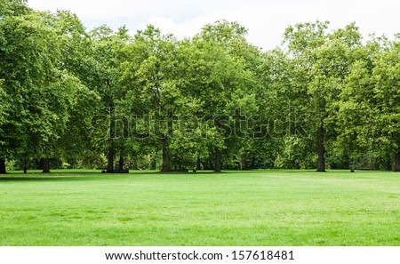 Tree and green grass in the park