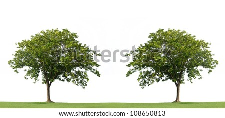 Tree and green grass isolated on the white background