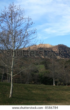 Tree and Hilly Terrain