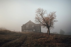 Tree and house in fog