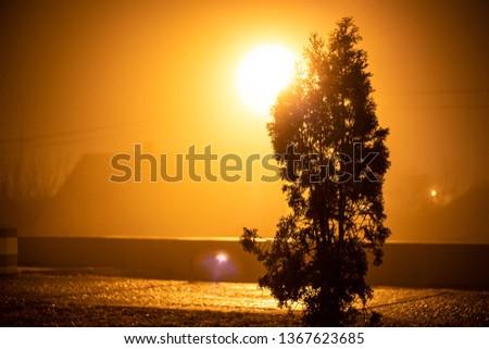tree and lantern
