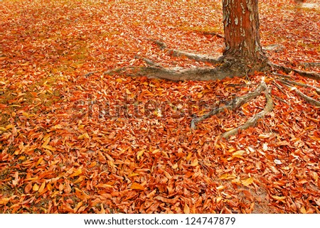 tree and leaves of autumn