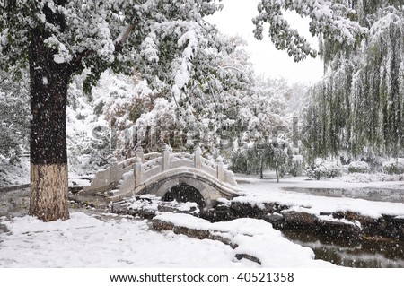 tree and little brige in snow