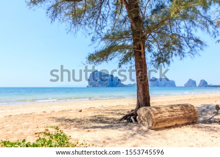 Tree and log on Rajamangala beach with limestone cliffs in the background,Trang province, Thailand