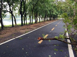 Tree and obstacle fallen on the road
