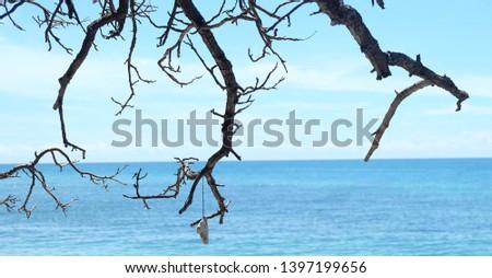 tree and sea. blue sky and sea. blue sea #1397199656