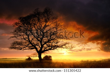 tree and storm - stock photo