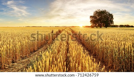 Tree and wheat field #712426759
