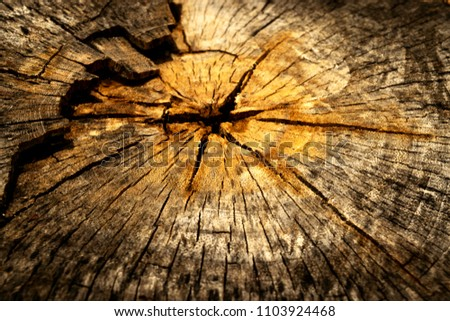 Tree annual ring,Tree annual ring background #1103924468