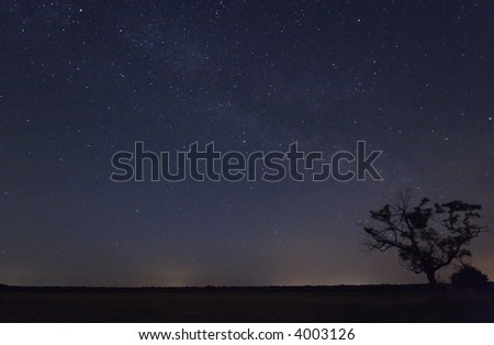 Tree at night with star trails in the sky.Star movement is caused by Earth\'s rotation and camera\'s long exposure.