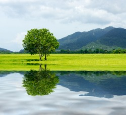 tree at paddy field