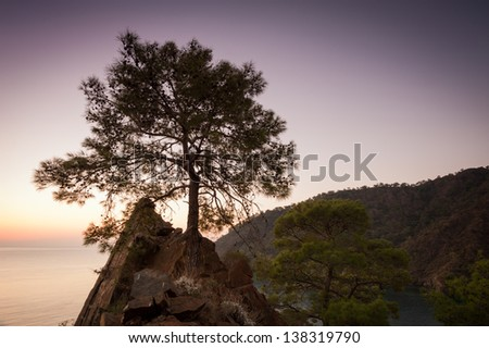 tree at sunrise. Lone pine tree on a rock near the Mediterranean Sea.