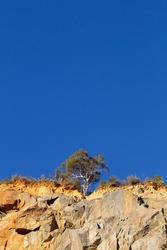 Tree at the top of a rockface against a blue Australian sky