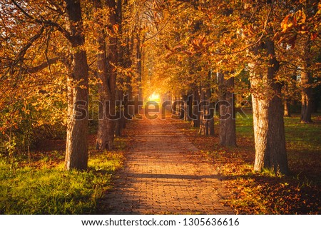 Tree avenue in autumnal sunset. Avenue with trees with brown golden autumnal foliage and leaves. The path is partially covered with fallen leaves. Photo in landscape mode