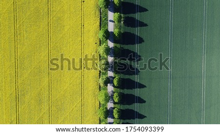 tree avenue trough green and yellow fields Сток-фото ©