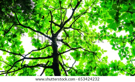 tree backdrop With green leaves and branches #653424232