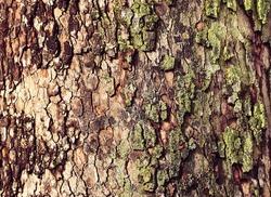 Tree background / texture