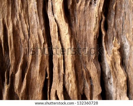 tree background Wall tree texture