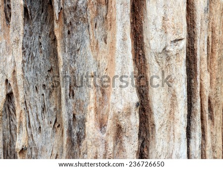 tree background Wall tree texture,old tree bark texture,Texture of tree background and Wall of tree texture
